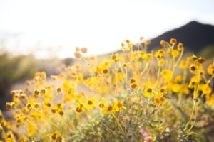 best practices for hormone health in the spring months